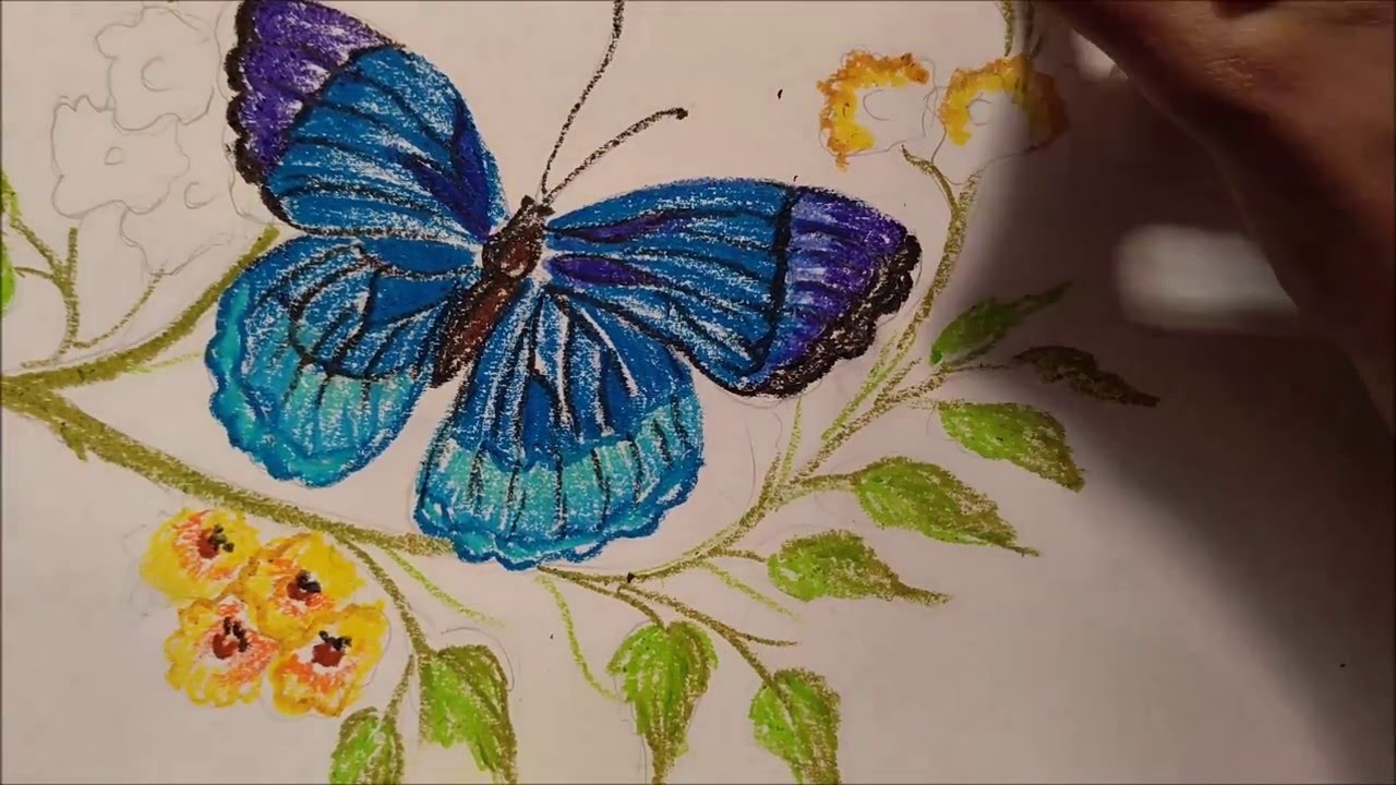 How To Draw Butterfly Using Oil Pastels