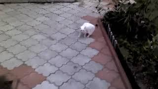 #Очень опасный котёнок,ржака,смешно до слёз))