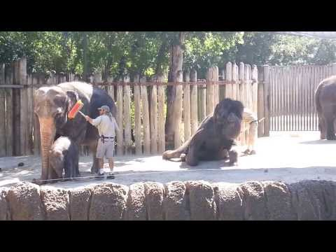 Elephant Wishes It Had Hair To Comb