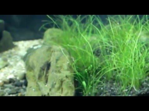 SUN SUN HJ311B - Бюджетный фильтр для небольшого аквариума. - YouTube