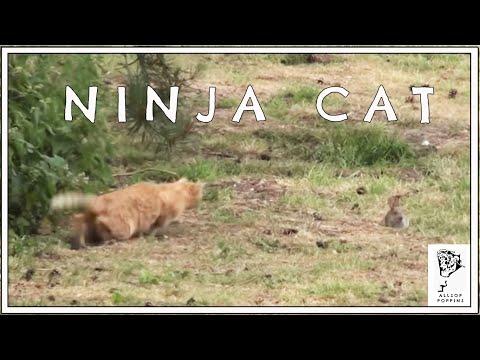 Ninja Cat Kills Rabbit