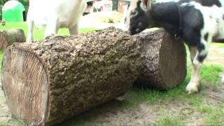 Promotiefilm - Camping 't Hop te Wijckel Friesland