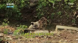 한국기행 - Korea travel_아궁이기행 2부 유쾌한 최씨 아저씨의 겨울_#002