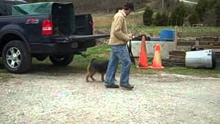 "Best Dog Training ""heel"" With An Adult Male Welsh Terrier 2015"