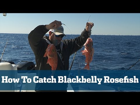 How To Catch Blackbelly Rosefish - Florida Sport Fishing TV
