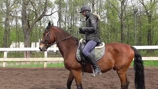 Основы управления лошадью. Ошибки новичков. Шаг, повороты, остановки.