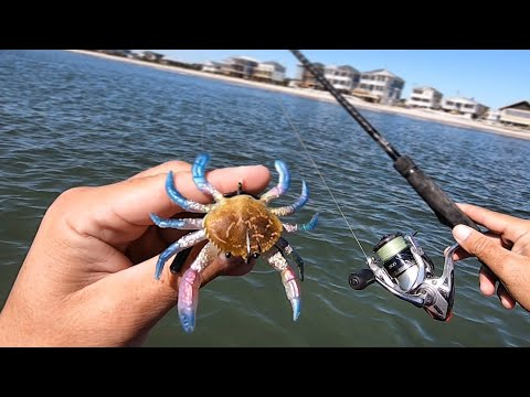 How To Rig & Fish Artificial Crabs + NON-STOP Action On BIG Fish W/Cut Blue Crabs