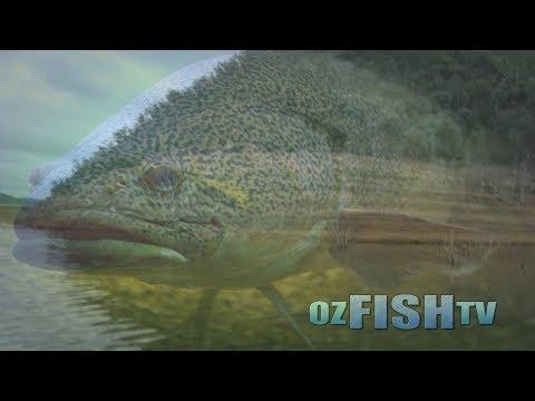 Catching Murray Cod & Big Rainbow Trout in Elidon Lake & Pondage