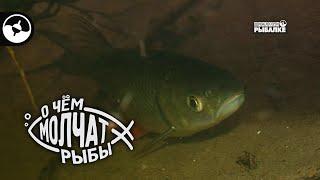 Где искать голавля   О чем молчат рыбы
