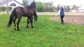 Конь убежал