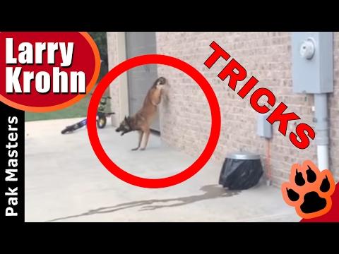 Fun Dog Tricks with Pak Masters / Heel Flip, Spread Them, Reverse Hand Stand