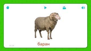 Баран - Карточки Для Детей - Домашние Животные - Карточки Домана