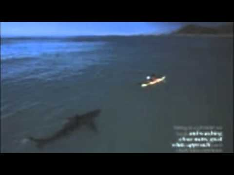 Man Attacked By Shark In Kayak Youtube