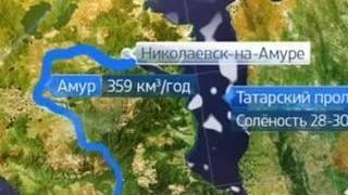 Депутат из Владивостока предложил перенести русло Амура