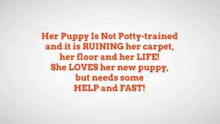 *How To Housetrain A Havanese Puppy FREE Mini-Course WOOT!