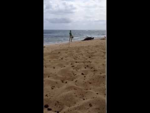 In Hawaii: What NOT To Do With a Monk Seal 2