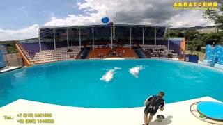 """Театр морских животных """"Акватория"""" (Ялта): синхронное плаванье белух"""