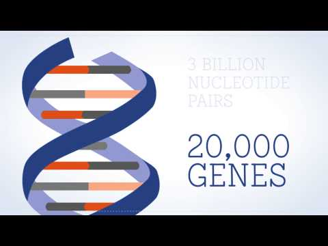 What is the Genome? - O que é o genoma?