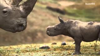 This baby rhino sneezing at the San Diego Zoo is adorable