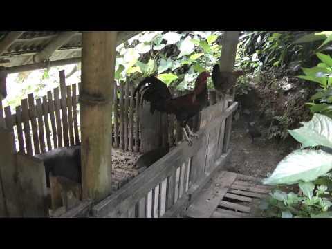 Indonesië 2012 deel 6 (Rondreis Baobab)