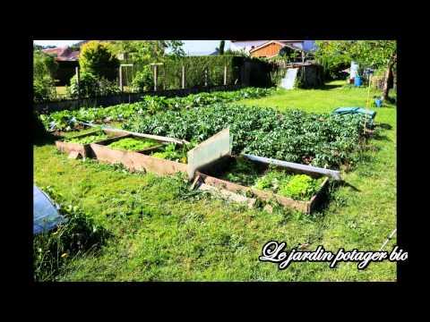 Jardin potager, Comment réussir à cultiver d'énormes salades en agriculture biologique