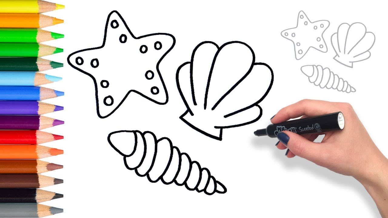 Learn How To Draw Sea Shells Coloring Pages For Kids Youtube