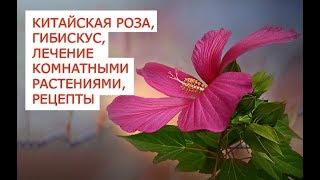 Китайская роза, гибискус, лечение комнатными растениями, рецепты(Почти у каждого из нас дома есть комнатные растения Цветочки кроме функций домашнего дизайна и успокаивающ..., 2015-07-25T14:36:46.000Z)