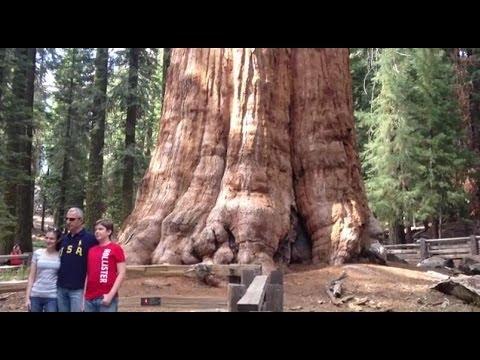 El arbol mas grande del mundo general sherman youtube for Arbol mas grande del mundo