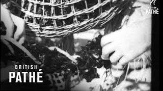 Cineviews In Brief No. 8 (1936)