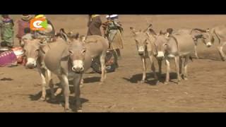 Punda wanaibwa na kuchunwa ngozi Turkana