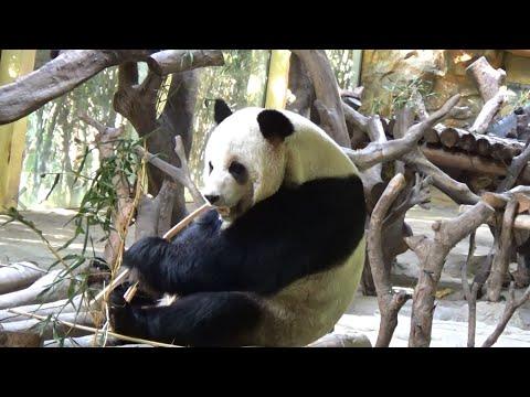 Chimelong Safari Park, Guangzhou