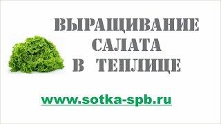 15 выращивание салата в теплице, сорта, грунт, подкормка
