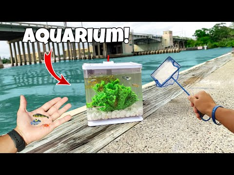 WORLDS Smallest SALTWATER AQUARIUM!!