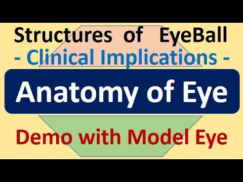 Anatomy of Eye - Clinical Implications