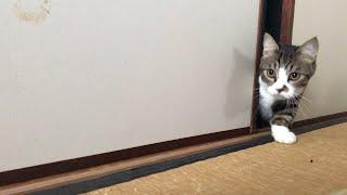 朝になったら起こしに来る猫がかわいい 【ゆずぽんだより】