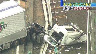 黒毛牛十数頭が散乱 東北道でトラック横転3人死傷(14/10/16) thumbnail