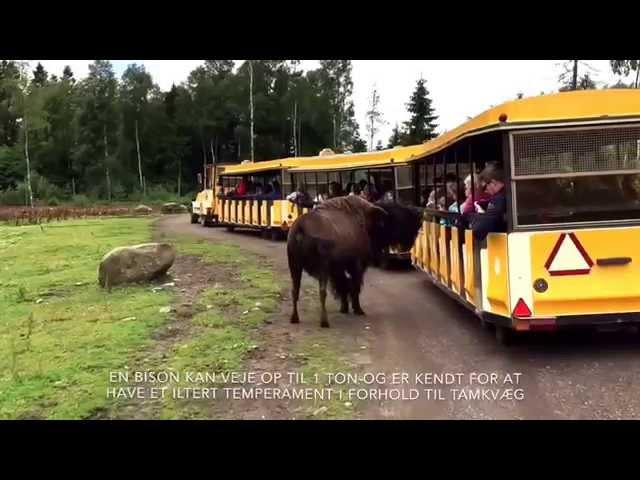 Campingferie.dk besøger en Elg og Bisonpark i Småland i Sverige.