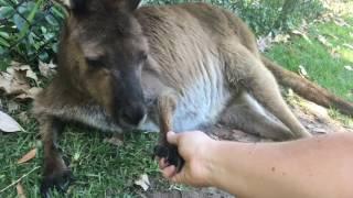 コアラにトカゲにウォンバット、オーストラリアに住む動物たちと片っ端から握手