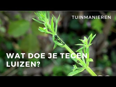 Olea europaea from YouTube · Duration:  1 minutes 2 seconds