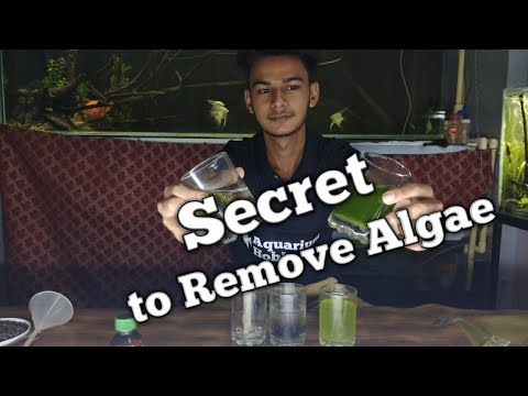 How To Remove All Type Of Algae