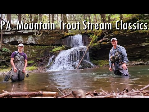 WBD - Fly Fishing PA  Mountain Trout Stream Classics  Wild Browns, Natives, Rainbows