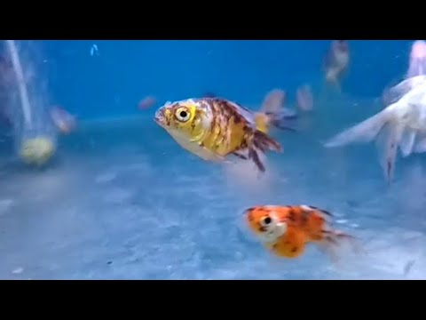 UNDERWATER WONDER'S in CHENNAI | ENJOY the FISH WONDERLAND