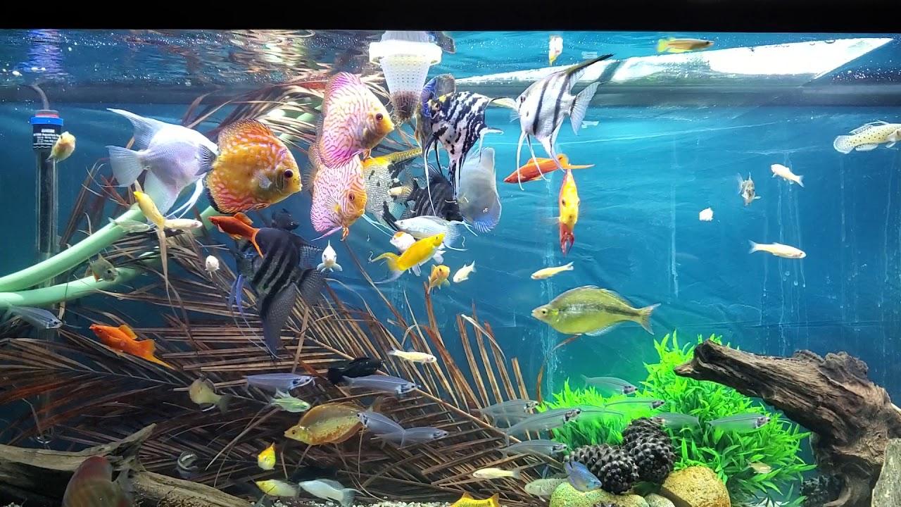 Fish tank 51