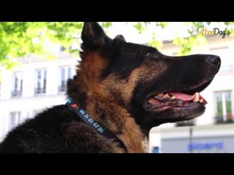 fd5adf376a32 Collier chien personnalisé - Stella et Ptifou. Matthieu AtooDog