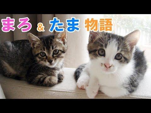 へその緒が付いたまま白いビニール袋で捨てられていた2匹の子猫たち☆たま&まろ物語