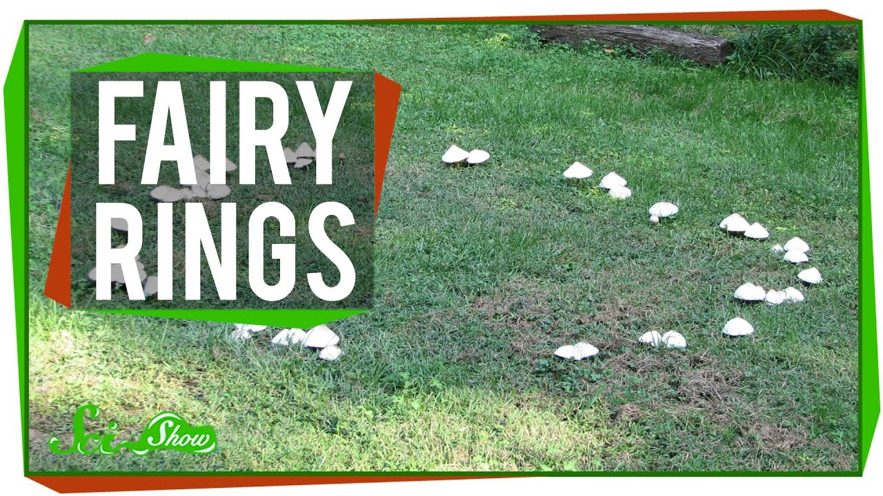 photography fairy picture stock rings photo a images getty detail in res lawn high oreades marasmius