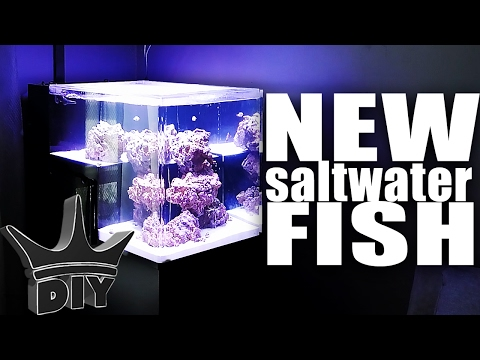 STOCKING MY SALTWATER AQUARIUM!!!