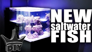 STOCKING MY SALTWATER AQUARIUM!!! thumbnail