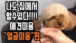 "Dog Beauty Beauty Learning Poodle ""Poodle Beauty"""