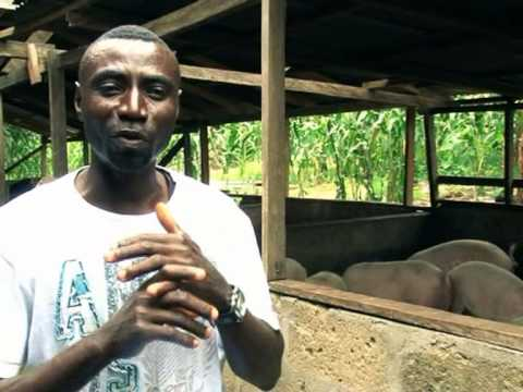 Ejisu-Juaben & Afigya Kwabere Pig Farmers Association